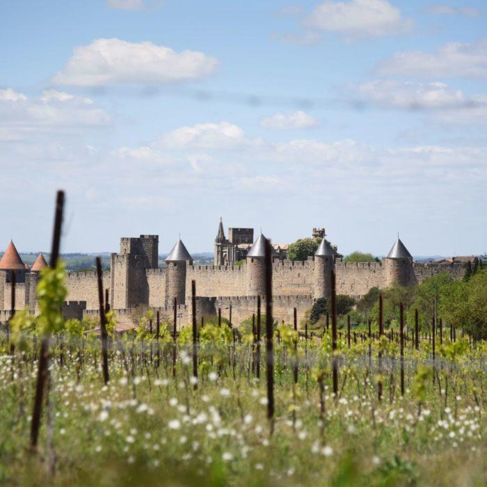 carcassonne-cite-vignoble-vue