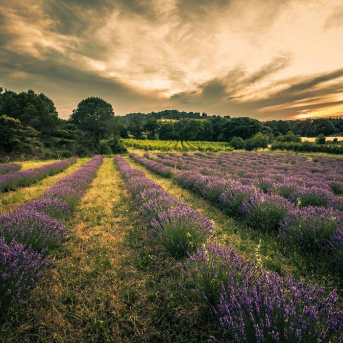 paysages-vignoble-lavande-corbières-grand-carcassonne