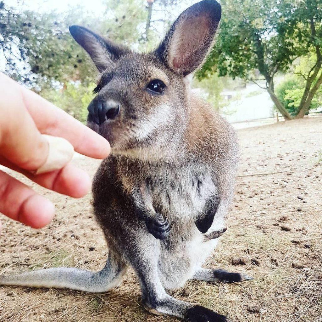 le parc australien parc animalier à carcassonne