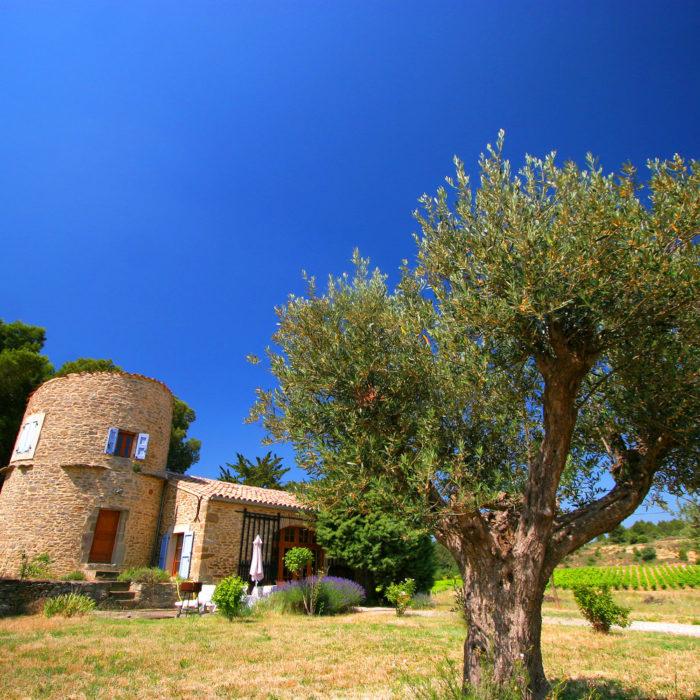 le-moulin-gite-laure-minervois-domaine-viticole-albas