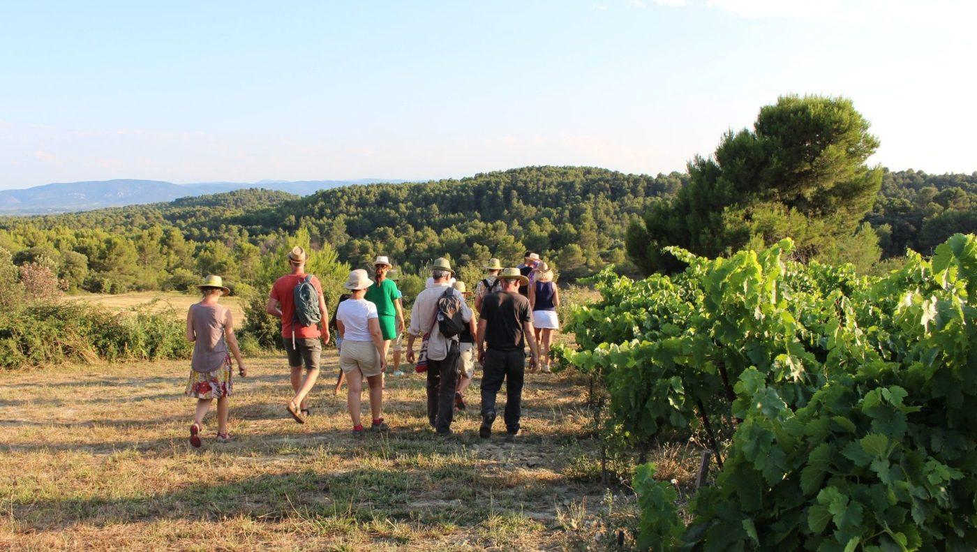 Paseos con vinicultores