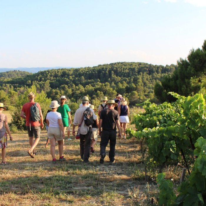 vin-balades-vigneronnes-grand-carcassonne