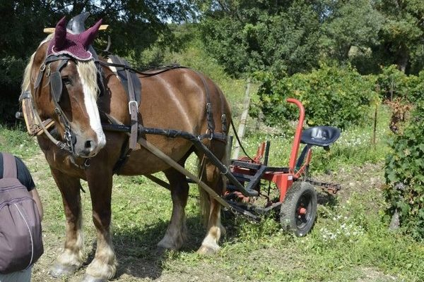 Domaine-Loupia-cheval
