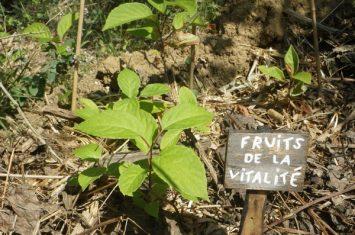 Jungle botanique 2 Montclar