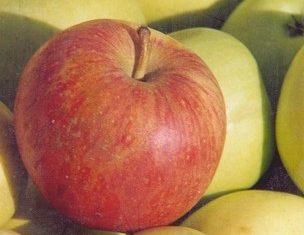 Pommes-2